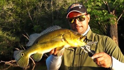 Pescaria de tucunaré-amarelo no rio Capim