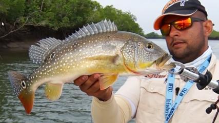 Pescaria inédita de tucunarés no mangue