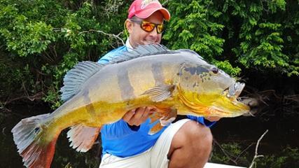 Os belos tucunarés-açús do rio Alegria na Amazônia