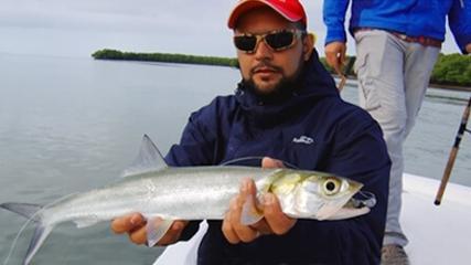 Pescaria de manguezal em Miami, nos Estados Unidos