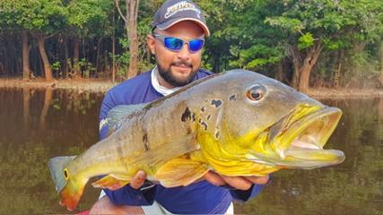 Capturando grandes tucunarés no rio Abacaxis
