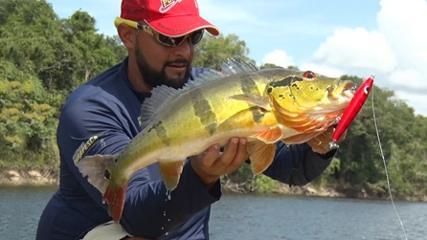 Pescaria de tucunarés pelos afluentes do rio Negro
