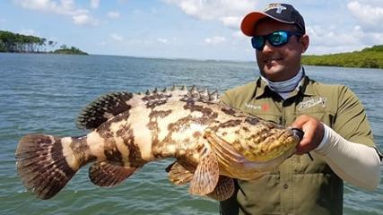 Robalo e mero no manguezal na Baía de Peruquara