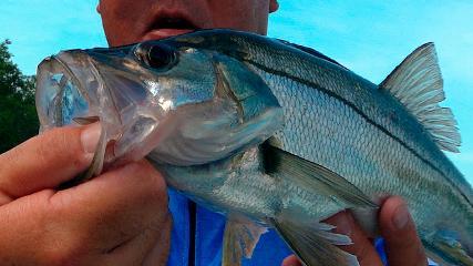 Saltwater - Pesca de robalo no pincho com camarão artificial