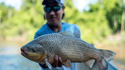 Pesca exploratória dos valentes piauçus
