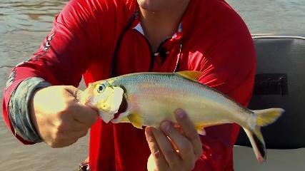 Da pesca tradicional até a noturna no rio Araguaia