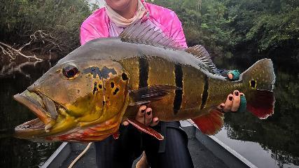 Pescando tucunarés no rio Jurubaxi