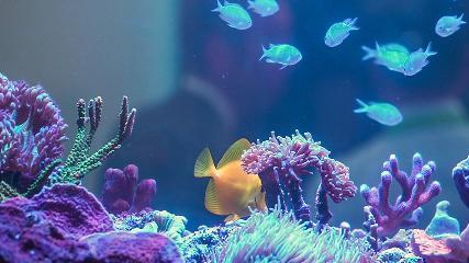 Reposição de cálcio em aquários marinhos