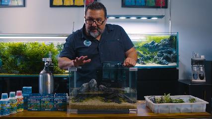 Montagem do primeiro aquário plantado