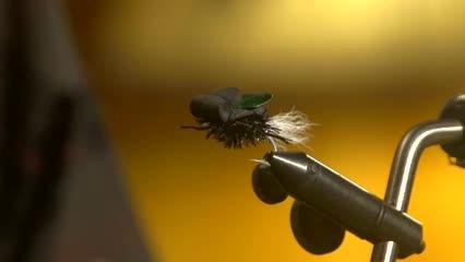 Atado de besouro para piraputangas