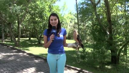 Encantos e bastidores do Gramado Zoo