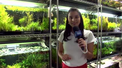 Mergulho pela indústria de aquarismo