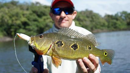 Pesca em Ação - Tucunarés amazônicos