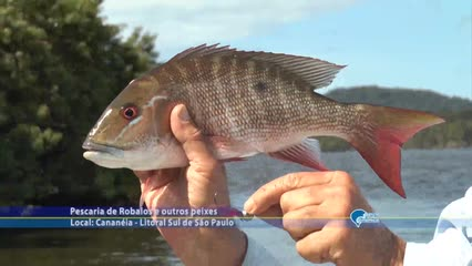 Pesca de robalos em Cananeia