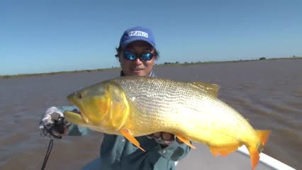 Dourado do Paraná