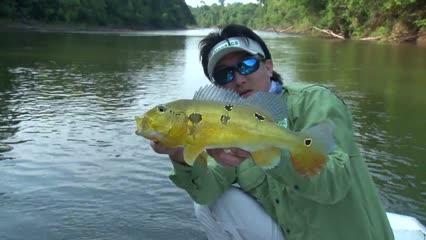Alternando iscas na pescaria de tucunaré-amarelo