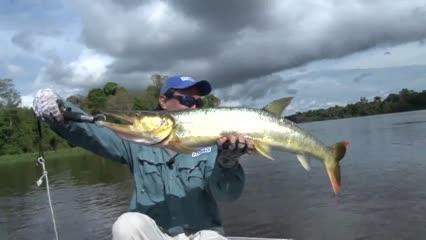 Bicuda, a flecha do rio