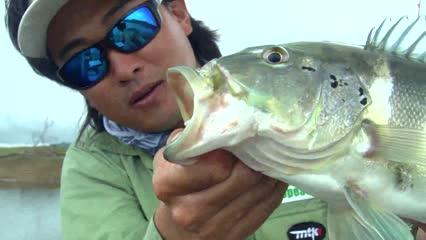 Tucunaré em pesca embarcada na Serra da Mesa