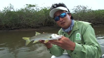 Pescaria de Robalo com isca artificial
