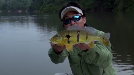 Variedade de peixes em reserva do rio Bararati