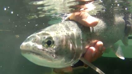 Trutas nas belíssimas águas do rio Futaleufú