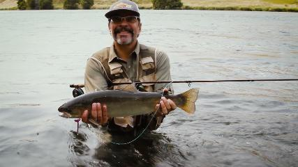 Truta Steelhead