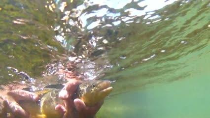 Pescaria clássica de truta com mosca