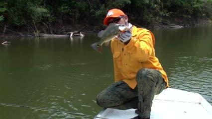 Pescaria de tucunaré no rio Bararati