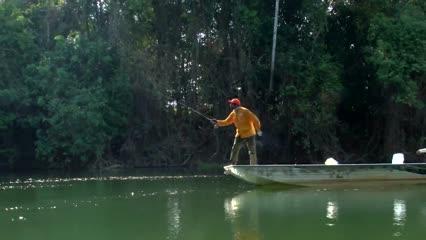 Explosão de tucunaré-amarelo no rio Bararati