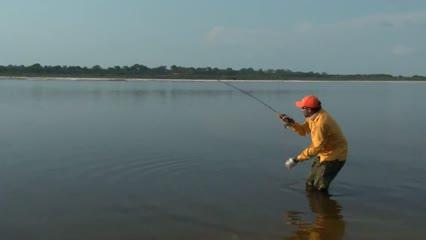 Grandes tucunarés no igarapé do rio Paratucu
