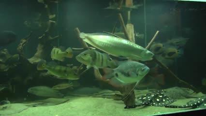 Aquarismo e pesca esportiva são destaque do Fish TV News