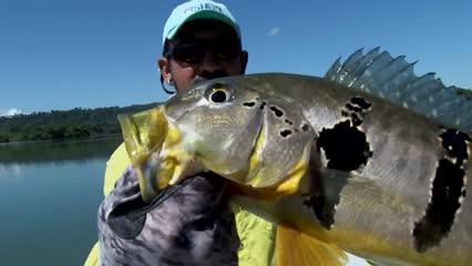 Pescaria na maciota para fisgar tucunaré