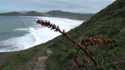 Surf e trilha na Praia do Rosa