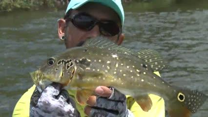 Apapá do rio Aripuanã