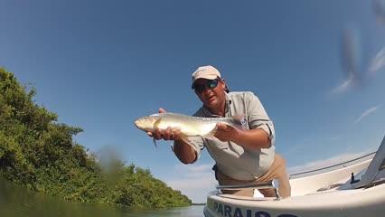 Pesca de batida para fisgar pacu
