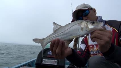 Pesca de robalo no litoral sul de São Paulo