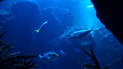 Final da viagem ao Japão, Sumida Aquarium e Templo de Ouro