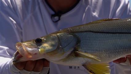 Pescando robalos no Rio Preguiças