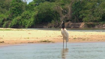 Mutirão de limpeza no rio Paraguai