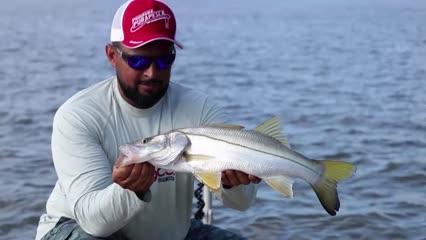 Pescaria de robalos em Quatipuru
