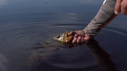 Pescaria inédita de Fly no Rio Guaporé
