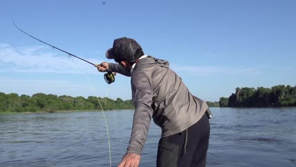 Pescaria inédita de Fly no Rio Guaporé - Parte II