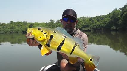 Fly no Rio Abacaxis: pescando tucunarés