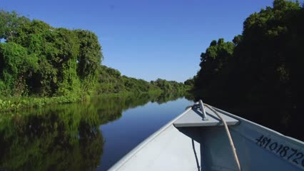 Capturas variadas no Pantanal