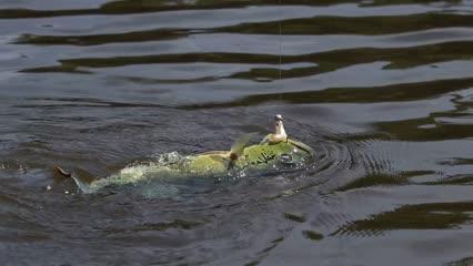 Pescaria é Insistência