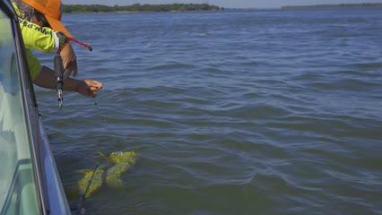Pescaria de rodada com iscas naturais