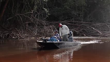 Show das traíras em Arirarra no Amazonas