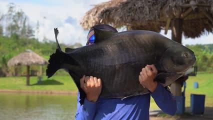A técnica goiana no Paraíso Verde Pesca e Lazer