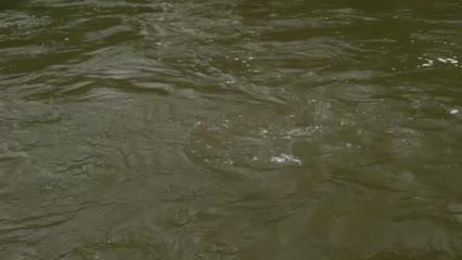 Pescaria exploratória no Rio Manso
