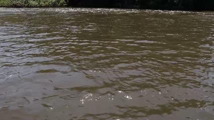 Pescaria variada no Rio Trombetas